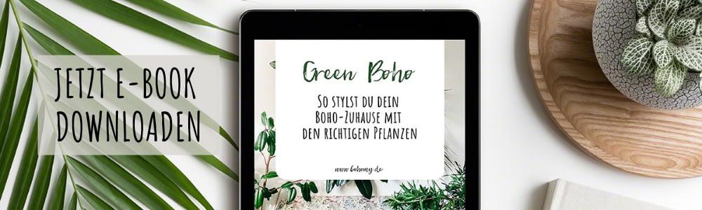 Green Boho - die richtigen Pflanzen für deine Boho Deko