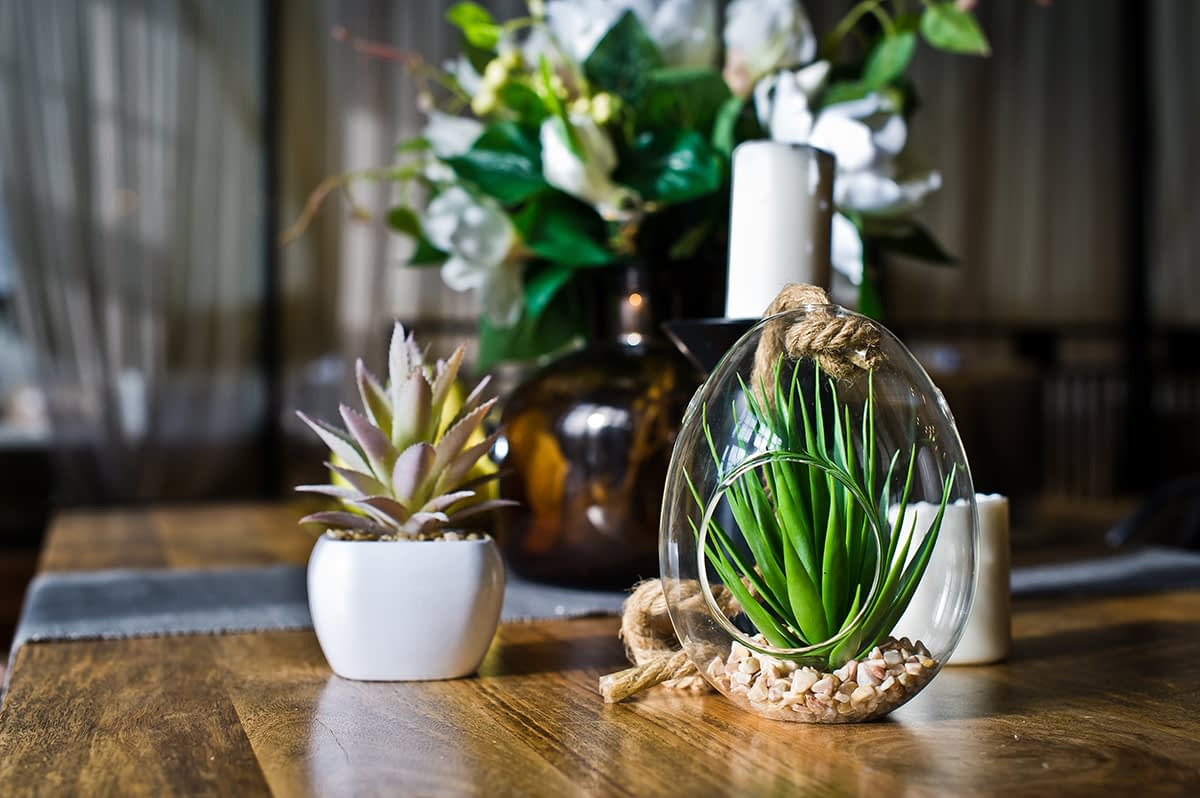 Succulent in a glass pot, home plant cactus. Design, interior, minimalism. Side view
