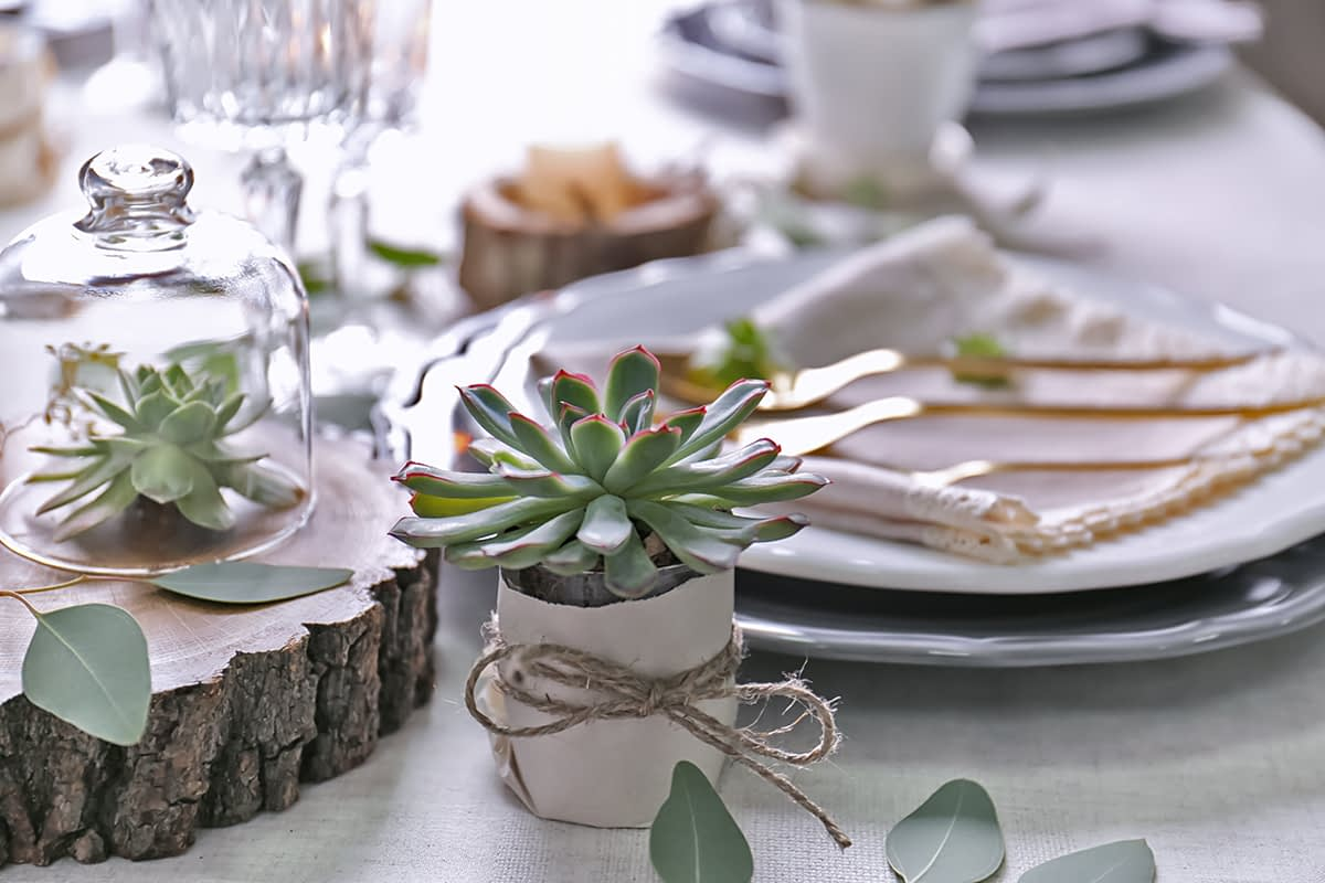 Table served with succulent plants for dinner