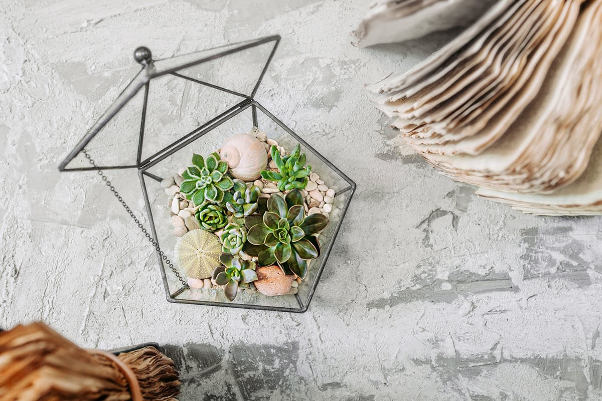 geometric glass vase with succulents, cactuses, stones and shells on gray cement table with old books. Scandinavian home decor, top view, selective focus