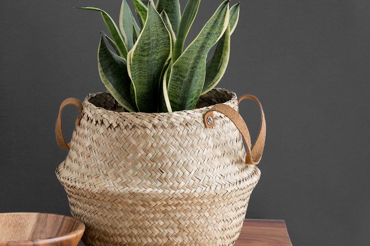 Korb mit Pflanze