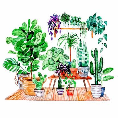 Urban Jungle: Die richtigen Pflanzen für dein Zuhause