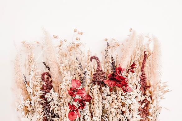 verschiedene getrocknete Blumen nebeneinander