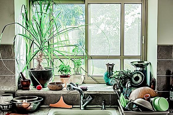 Green Boho - die Top 10 Küchenpflanzen